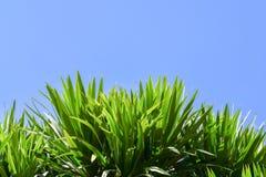 Bello albero verde su un fondo bianco sull'alta definizione Immagine Stock