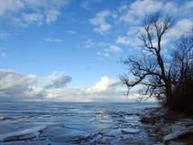 Bello albero vicino allo sputo nell'inverno, Lituania di Curonian Fotografie Stock