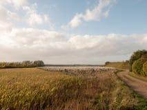 Bello allungamento di tornitura esterna di estate del paesaggio del campo dell'azienda agricola Fotografia Stock