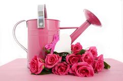 Bello annaffiatoio rosa di tempo di primavera Immagini Stock Libere da Diritti