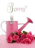 Bello annaffiatoio rosa di tempo di primavera Fotografia Stock