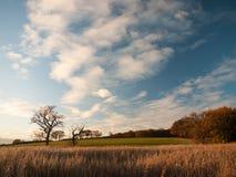 Bello apra le nuvole di bianco del cielo blu dello spazio della campagna del paesaggio Fotografia Stock