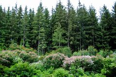 Bello arboreto verde nel parco Sofiyivka fotografie stock