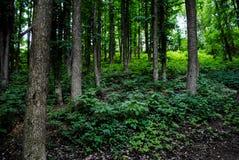Bello arboreto verde nel parco Sofiyivka fotografia stock libera da diritti