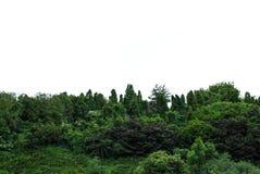Bello arboreto verde nel parco Sofiyivka immagini stock