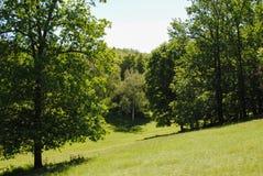 Bello arboreto verde nel parco Sofiyivka immagine stock libera da diritti