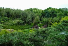 Bello arboreto verde nel parco Sofiyivka fotografia stock