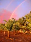 Bello arcobaleno in Costa Rica Fotografia Stock