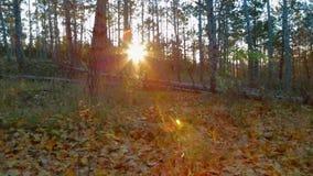 Bello Autumn In The Forest in anticipo video d archivio