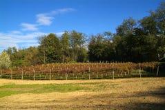 Bello Autumn Landscape With Multi-Colored Lines delle vigne delle vigne Autumn Color Vineyard fotografia stock