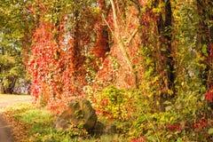 Bello Autumn Landscape Scenery Full di colore immagine stock