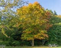 Bello Autumn Leaves 2 fotografie stock libere da diritti