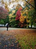 Bello autunno Fotografia Stock Libera da Diritti