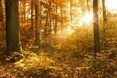 Bello autunno Fotografie Stock Libere da Diritti