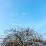 Bello autunno Fotografie Stock