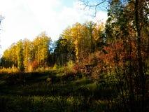 Bello autunno dorato polacco fotografie stock