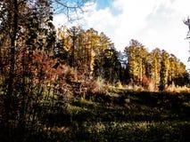 Bello autunno dorato polacco immagine stock libera da diritti
