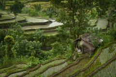 Bello Bali. Fotografie Stock