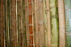 Bello bambù in giardino Immagini Stock