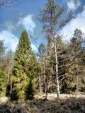 Bello bly cielo sotto gli alberi fotografia stock