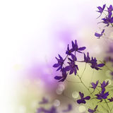 Bello bordo floreale Fotografia Stock Libera da Diritti