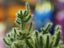 Bello cactus da da vicino immagine stock