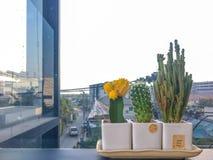 Bello cactus in vasi su fondo di costruzione esterno immagine stock