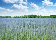 Bello campo dei fiori selvaggi. fotografia stock