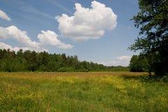 Bello campo di estate Fotografia Stock