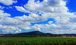 Bello campo di grano fotografia stock