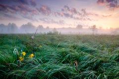 Bello campo verde Fotografia Stock