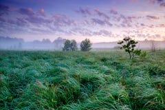 Bello campo verde Fotografia Stock Libera da Diritti