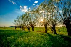 Bello campo verde Fotografie Stock