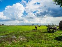 Bello campo verde con il cielo soleggiato blu Fotografia Stock Libera da Diritti