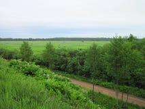 Bello campo verde di estate con la mucca, Lituania Immagine Stock Libera da Diritti