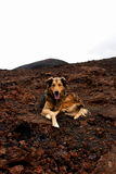 Bello cane Fotografia Stock