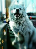 Bello cane Fotografie Stock