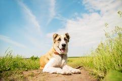 Bello cane all'aperto su un campo Fotografia Stock Libera da Diritti