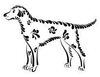 Bello cane decorativo Fotografia Stock Libera da Diritti