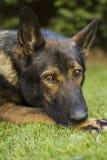 Bello cane del giardino Immagini Stock Libere da Diritti