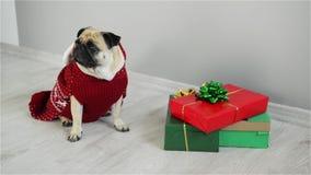 Bello cane della razza un carlino in un vestito della renna Il cane è vestito in un maglione bianco rosso e nella seduta accanto  video d archivio