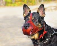 Bello cane di pastore Immagine Stock