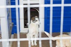 Bello cane leggero dietro il riparo delle barre immagine stock libera da diritti
