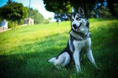 Bello cane sulla natura Immagini Stock Libere da Diritti
