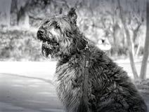 Bello cane in un parco Immagini Stock