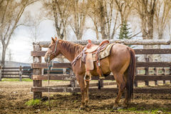 Bello cavallo Fotografia Stock