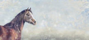Bello cavallo arabo sul fondo di inverno della neve, insegna per il sito Web immagine stock