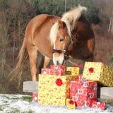 Bello cavallo con i regali di natale Fotografia Stock