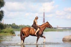 Bello cavallo da equitazione dell'adolescente nel fiume Fotografie Stock Libere da Diritti