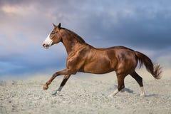 Bello cavallo rosso nel moto immagine stock
